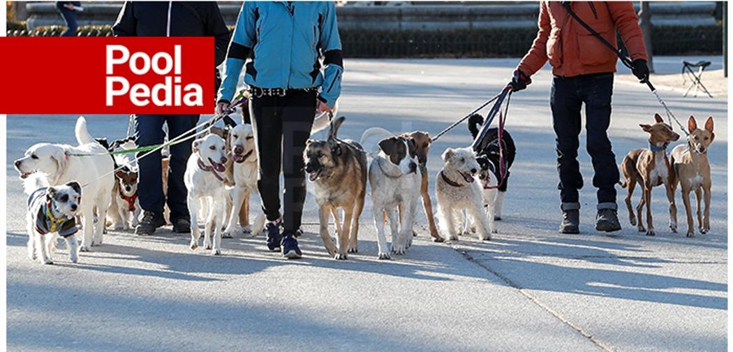 راه بردن حیوانات خانگی